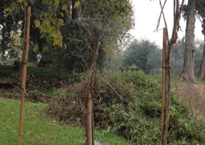 06edenwood - arbusti