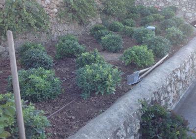 14edenwood - giardino elis piante
